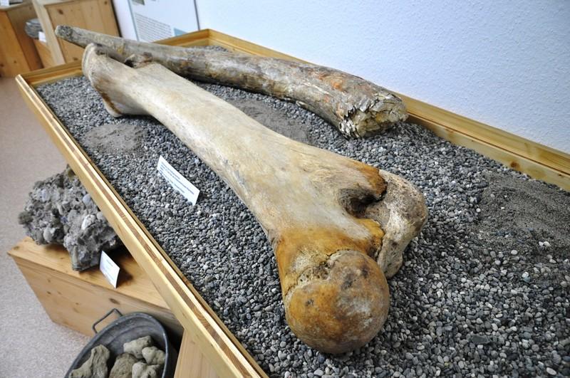 Mammut-Oberschenkelknochen und Mammut-Stoßzahn