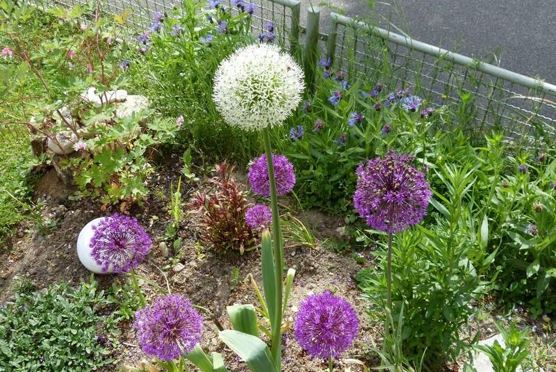 Die Entente Florale strahlt auch in die Nachbargemeinden aus - hier der Garten von Pasqual Karasch aus Schwörstadt.