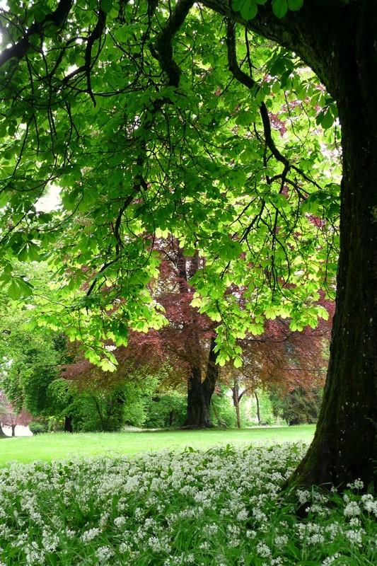Im Stadtpark von Rheinfelden (Aargau)