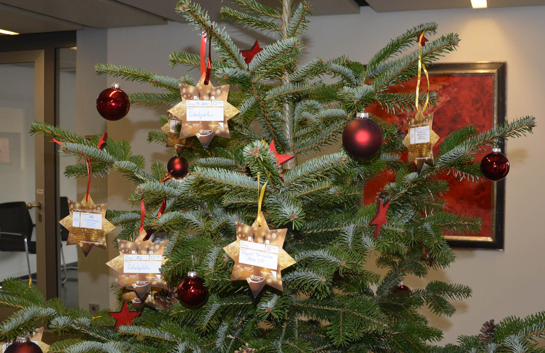 Sterntaler am Baum