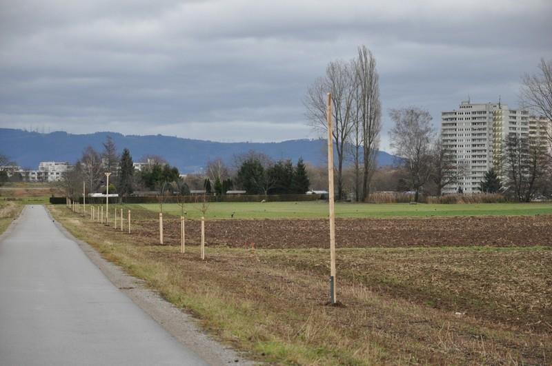 Neue Bäume und Greifvogelsitzstangen stehen am Staffelweg.