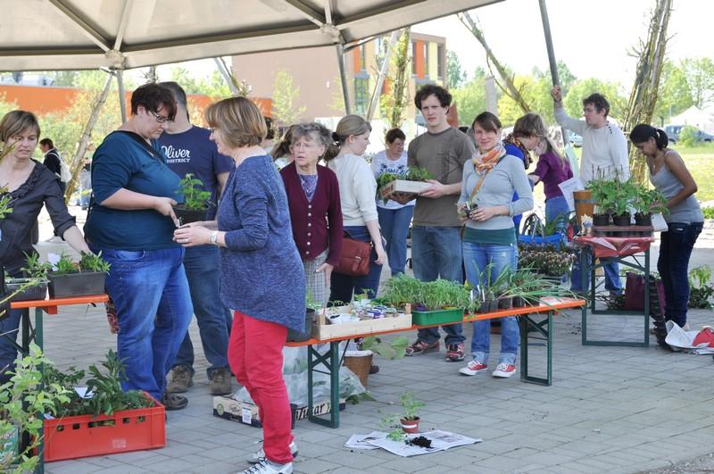 Rheinfelder Pflanzenflohmarkt