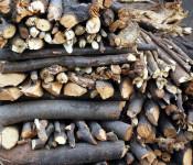 Brennholzbestellung bis 9.12. bei der Stadtverwaltung.