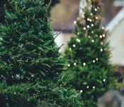 Baumspenden für Weihnachtsdekoration der Innenstadt gesucht.