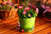 Am 22. April findet der 6. Rheinfelder Pflanzenflohmarkt statt.