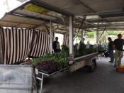 Die Stadtgärtnerei war mit einem breiten Angebot an Pflanzen und Setzlingen vertreten.