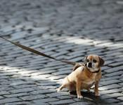 Im Stadtgebiet von Rheinfelden und in den Ortsteilen besteht sowohl eine Anleinpflicht für Hunde als auch eine Pflicht zur Beseitigung von Hundekot.