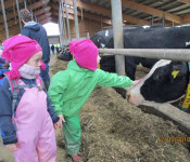 Die vielen Kühe im Stall von Andreas Kessler in Adelhausen haben die kleinen Besucher sehr beeindruckt.