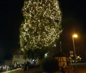 Der höchste freigewachsene Weihnachtsbaum Deutschlands erstrahlt wieder ab 24. November, 19 Uhr.