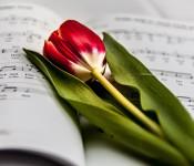 Eine Tulpe liegt auf einem Notenheft.
