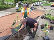 Die Mitarbeiter der Stadtgärtnerei Stefan Frederich und Rene Wenk haben Rheinfelder Apfelbäume in Mouscron gepflanzt.