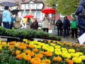 Trotz des schlechten Wetters erfreuten sich viele Besucher an der Farbenpracht des Geranienmarktes. Auch Oberbürgermeister Eberhardt zeigte sich von der Angebotsvielfalt beeindruckt.