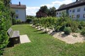"""Der im Rahmen des Projekts """"Verpackungsfreier Markt"""" entstandene, kleine Weinberg in Herten zählt auch zu den ökologischen Ausgleichsmaßnahmen."""