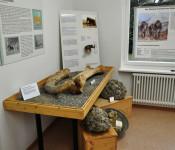 Ausstellung mit Mammut-Oberschenkelknochen und Mammut-Stoßzahn