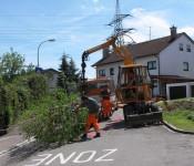 Die Stadtgärtner bringen den neuen Baum.