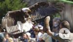 Vogelpark_Steinen_Foto