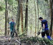 Im Stadtwald werden vorgezogene Ausgleichsmaßnahmen durchgeführt.