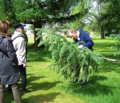 Thomas Schmitt wusste viel, über die Bäume im Herbert-King-Park zu berichten.