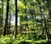 Der Stadtwald gilt als gesund.