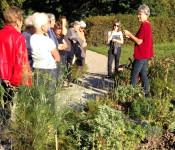 Silvia Senn erklärt die Heilwirkung der Pflanzen.