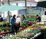 Geranienmarkt 2015
