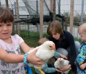 Rebecca Übelin mit Kindern und Hühnern im Gehege