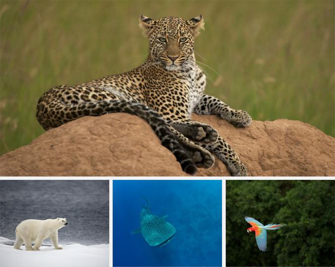 """Die Multivisionsshow """"Naturwunder Erde"""" von Markus Mauthe wird am 9. März in Rheinfelden zu sehen sein."""