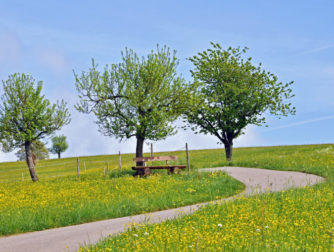 Bäume und Wiesen auf dem Dinkelberg, mittig ein Weg an dem eine Bank steht