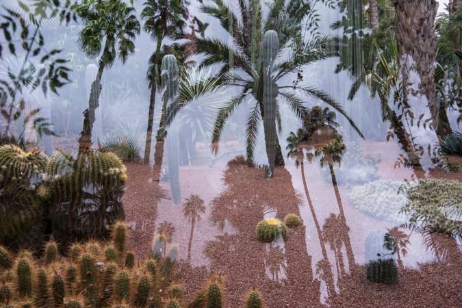 Eindruck aus Marrakesch - Pflanzen