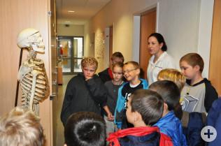 Saskia Deitz erklärte den Kinder den Aufbau des Skeletts.