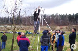 Baumschnittkurs des Obst- und Gartenbauvereins Nollingen