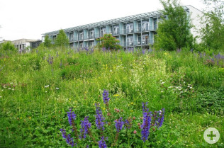 Natur pur umgibt die Gebäude der Reha in Rheinfelden (Aargau).