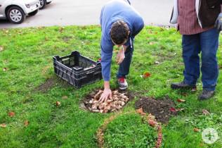 Bufdi Jannik Macke füllt den Tuff mit Blumenzwiebeln.