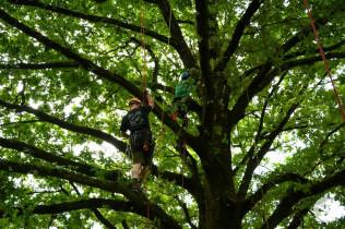 Der Beruf als Baumkletterer wurde vorgestellt.